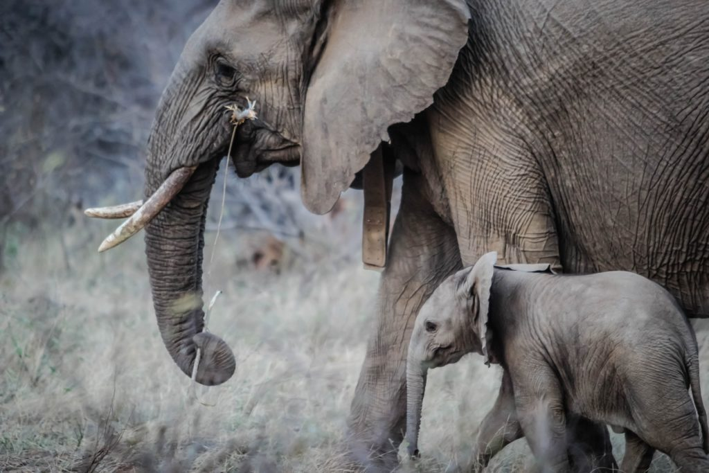 Learn life lessons from animal Elephant