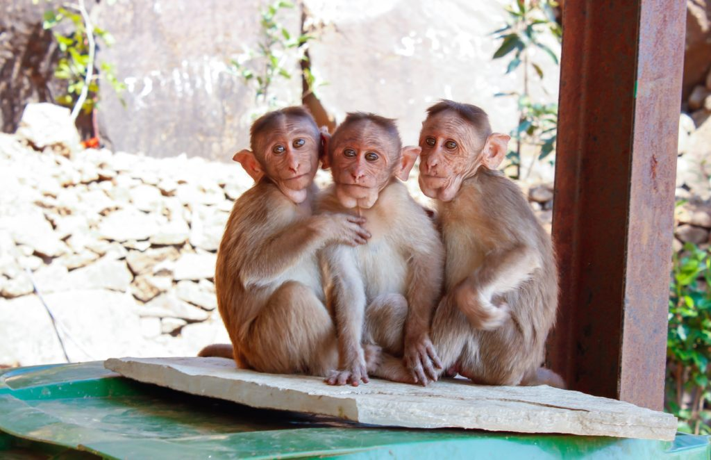 Adorable monkeys can teach you life lessons