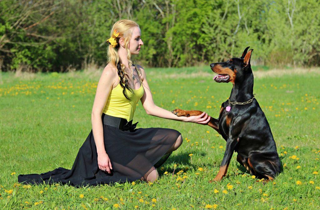 Learn How An Animal Dog A Good Friend Of Human
