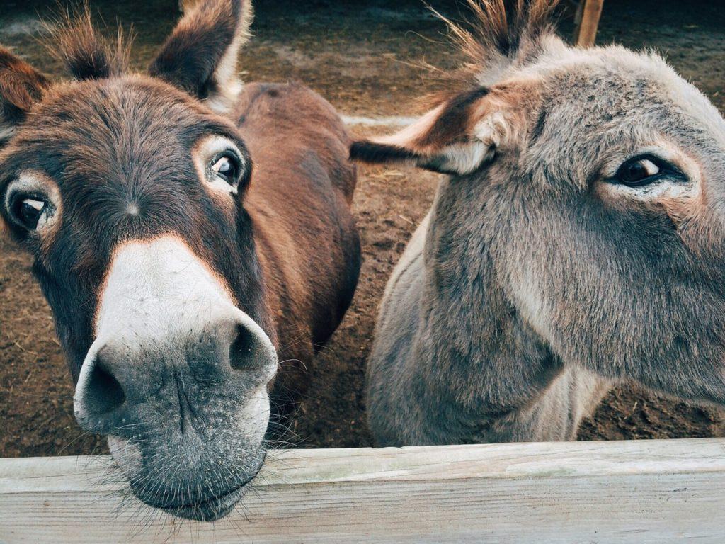 Donkeys, yet inspirational to make you good human