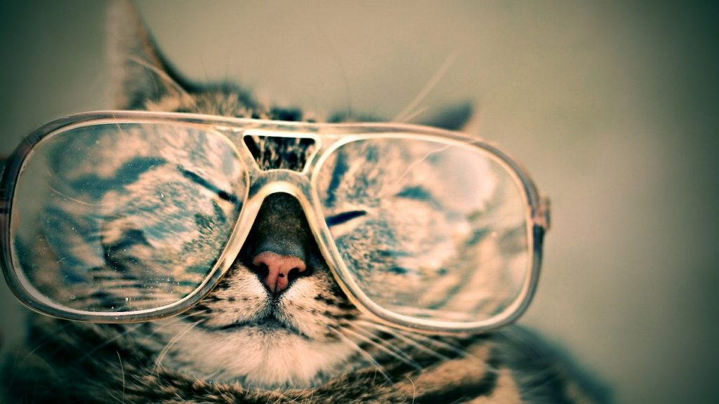 CAT Wearing Specs-Pix-Pixabay LoveYouFamily.com